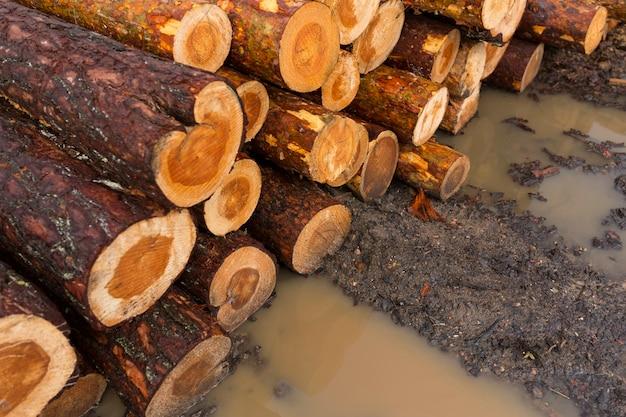 Deforestazione, distruzione della foresta. raccolta del legname. mucchio, pila di molti tronchi segati di pini. foto di alta qualità