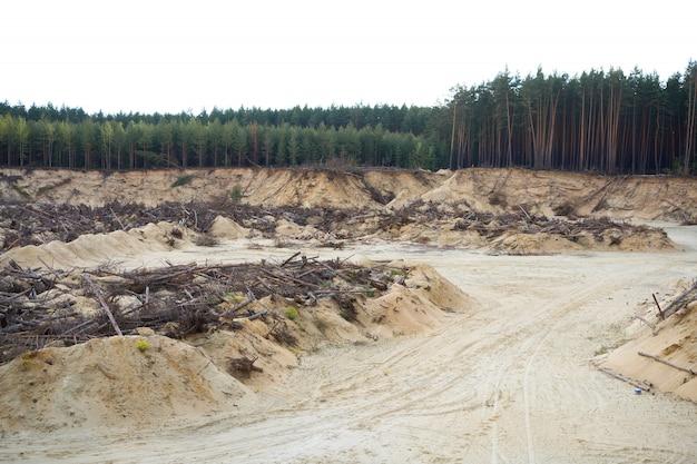 Disastro forestale di deforestazione
