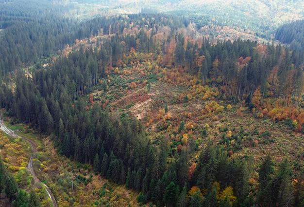 Deforestazione all'interno di una grande foresta per lavori agricoli.