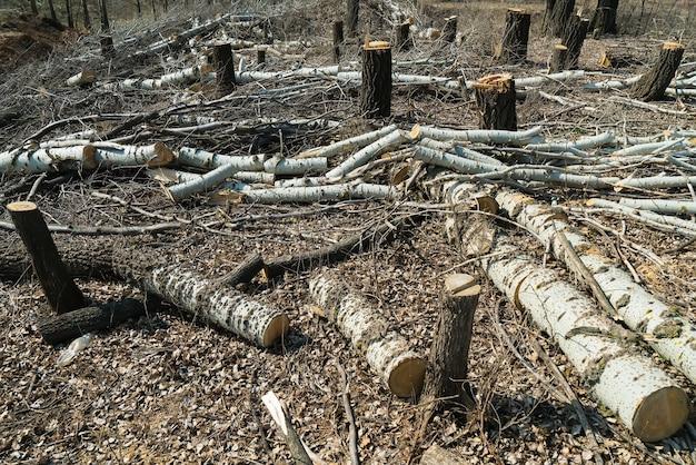 Deforestazione. zona taglio alberi. legname.