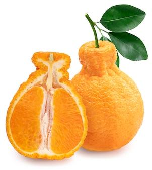 Mandarino dekopon arancia o sumo mandarino con foglie isolate