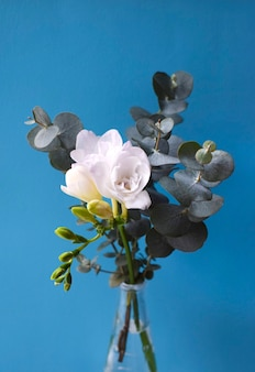 Profumo delicato con fiori di resia bianca con rametti di eucalipto su superficie blu