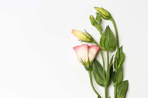 Delicati fiori primaverili su sfondo bianco