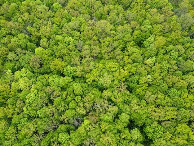 Vista dall'alto di una fitta foresta decidua verde.
