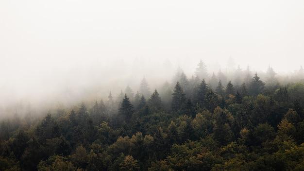 Fitta foresta con nebbia al mattino con copyspace.