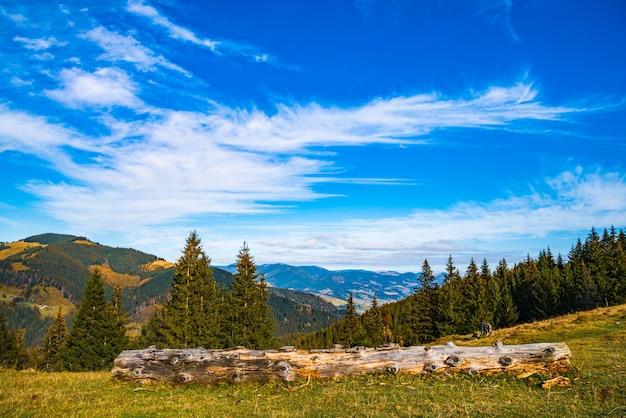 Fitta mistica foresta di conifere che cresce sulle colline che si trovano accanto al registro in una soleggiata giornata estiva calda