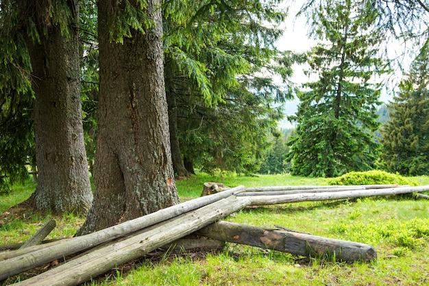 Fitta mistica foresta di conifere che cresce sulle colline che giace accanto a travi segate in una soleggiata giornata estiva calda