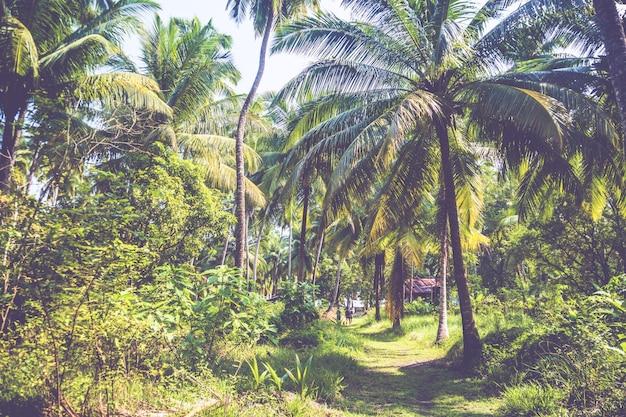 Alberi che crescono densamente in un palmeto. cespugli verdi e palme su un'isola esotica sullo sfondo.