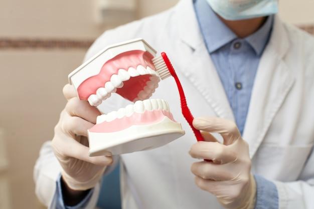 Dentista pulizia mascella artificiale