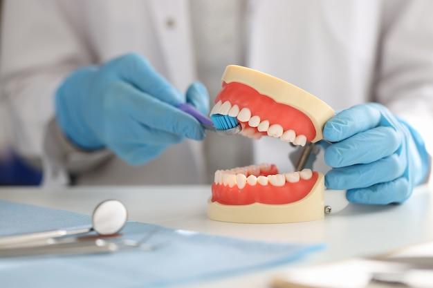 Il dentista mostra sulla mascella artificiale come lavarsi correttamente i denti con la mezza bocca dello spazzolino da denti