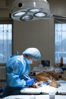 Dentista chirurgo veterinario pulito cane denti anestesia tavolo operatorio clinica veterinaria