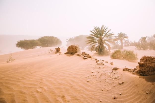 Paesaggio desertico