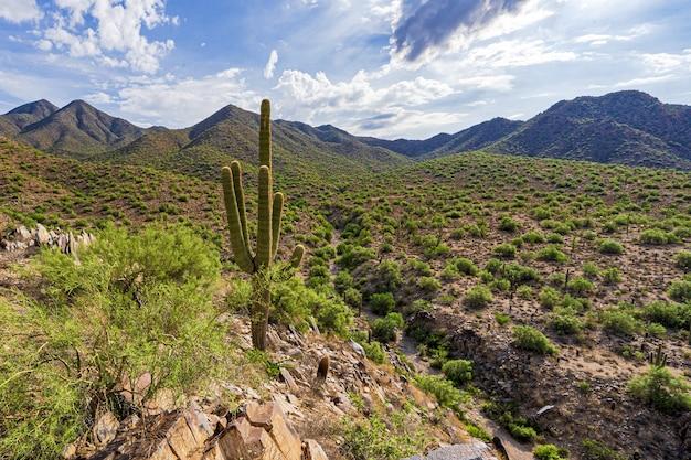 Un lavaggio del deserto e un passo di montagna
