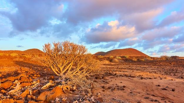 Deserto con cespugli nel sud di tenerife al tramonto, isole canarie - paesaggio panoramico