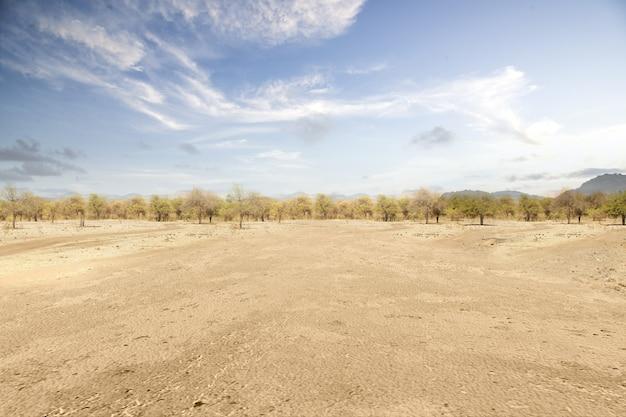 Deserto con alberi e sfondo azzurro del cielo