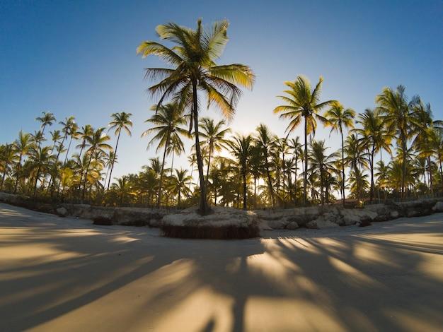 Spiaggia tropicale deserta con palme da cocco al tramonto.