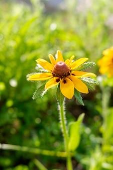 Dettaglio di un bel fiore giallo con petali setosi e sfondo sfocato.