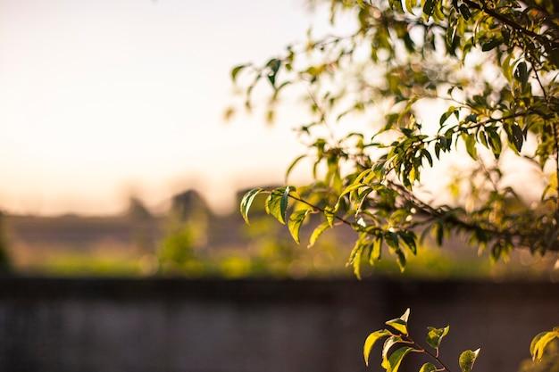 Particolare di un ramo mosso dal vento in primavera in un contesto di campagna