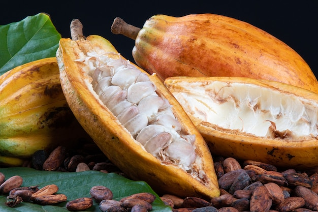 Dettaglio dei frutti di cacao tagliati e fave di cacao crude.