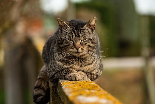 Dettaglio del simpatico gatto che riposa sul muro