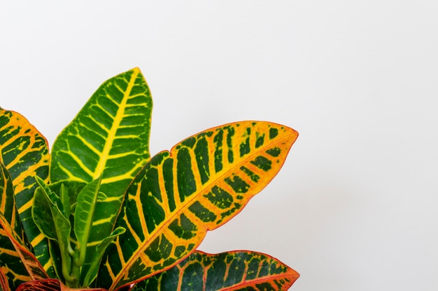 Particolare delle foglie verdi e gialle