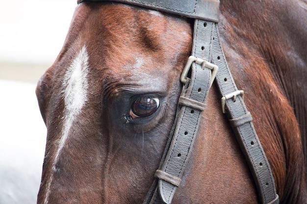 Dettaglio dello sguardo triste del cavallo marrone.