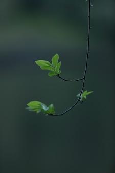 Particolare delle foglie degli alberi che spuntano