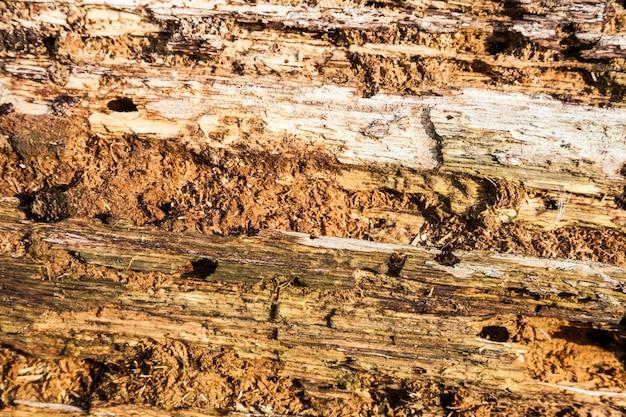 Dettaglio di una corteccia molto vecchia sotto la calda luce del sole
