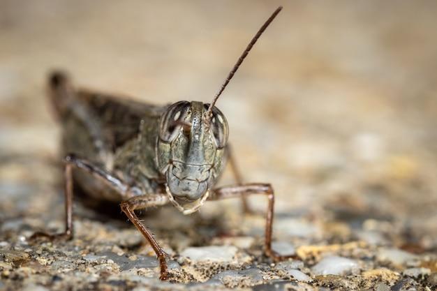 Foto dettagliata del primo piano della locusta scattata in giardino