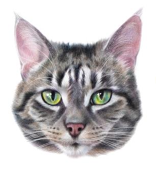 Ritratto a colori realistico dettagliato di un gatto grigio a strisce con gli occhi verdi. testa di gatto disegno isolato su uno sfondo bianco.