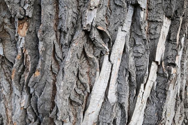 Fondo dettagliato di struttura della corteccia di albero