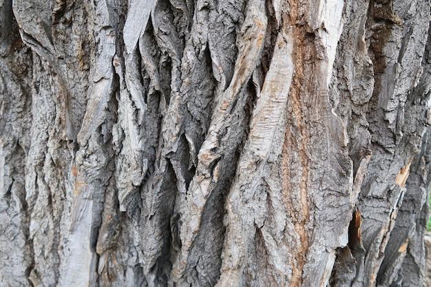 Fondo dettagliato di struttura della corteccia di albero.