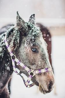 Deviazione del cavallo da corsa inglese