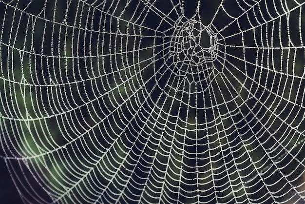 Rugiada su una ragnatela in un giardino