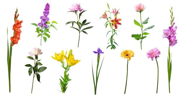 Diversi bellissimi fiori primaverili isolati su sfondo bianco