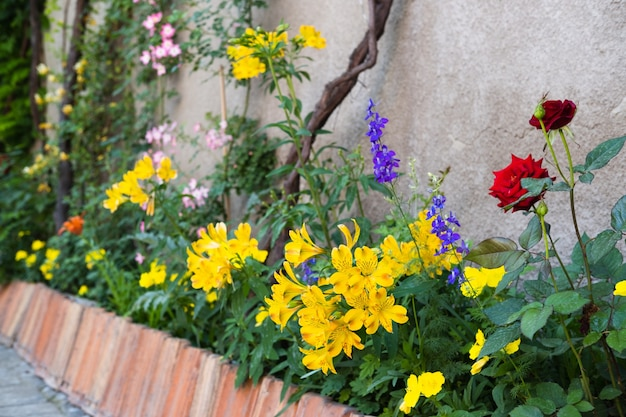 Diverse piante da fiore nell'accogliente angolo del giardino del cortile
