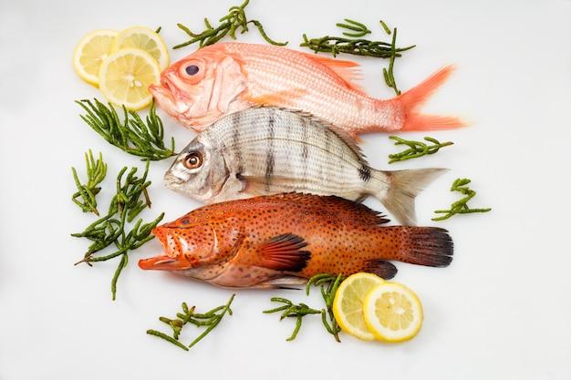 Pesce di diverso cibo marmorizzato rockcod pesce persico di mare profondo e cernia corallina alghe limone