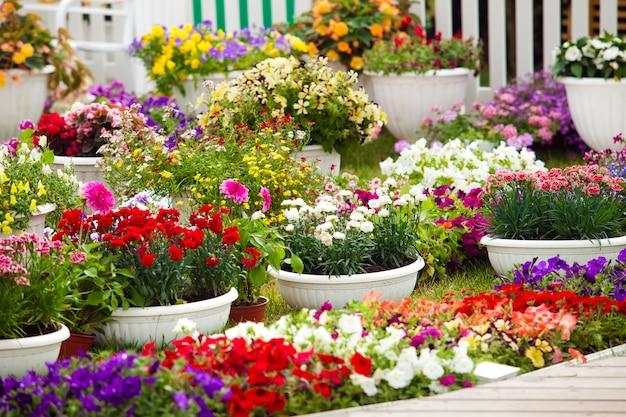 Diversi tipi di fiori da giardino in vaso