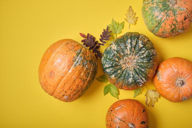 Diverse zucche su uno sfondo giallo, vista dall'alto, foglie di autunno e zucche con escrescenze sulla buccia