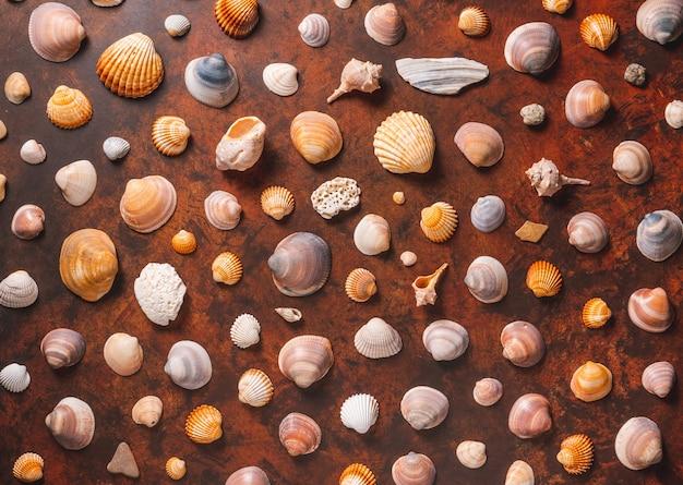Diverse conchiglie su un tavolo di legno marrone