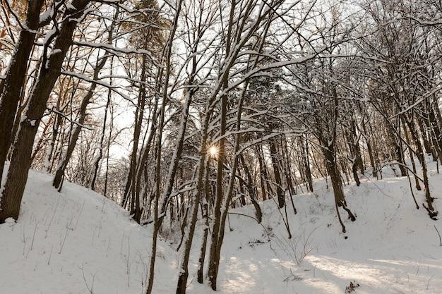 Diversi tipi di alberi decidui spogli senza fogliame nella stagione invernale, alberi spogli coperti di neve dopo nevicate e bufere di neve nella stagione invernale