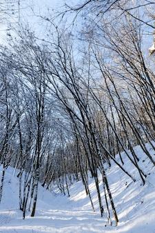 Diversi tipi di alberi decidui nudi senza fogliame nella stagione invernale, alberi spogli coperti di neve dopo nevicate e bufere di neve nella stagione invernale