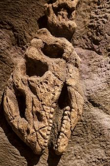 Fossile di dinosauro