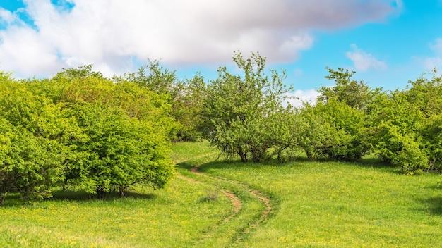 Strada sterrata su collina verde