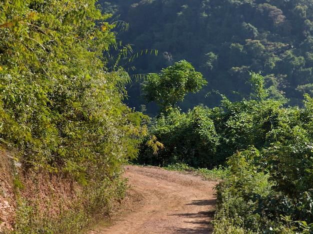 Strada non asfaltata che passa attraverso la foresta, luang prabang, laos