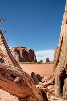 Strada sterrata con alberi morti nel deserto, con un paesaggio emblematico e cielo blu
