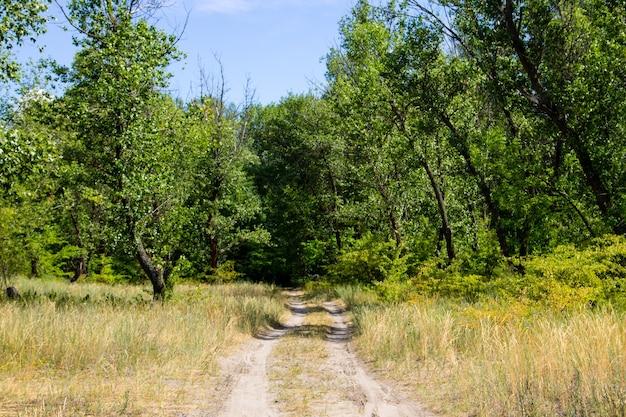 Strada rurale sporca nella foresta verde in estate