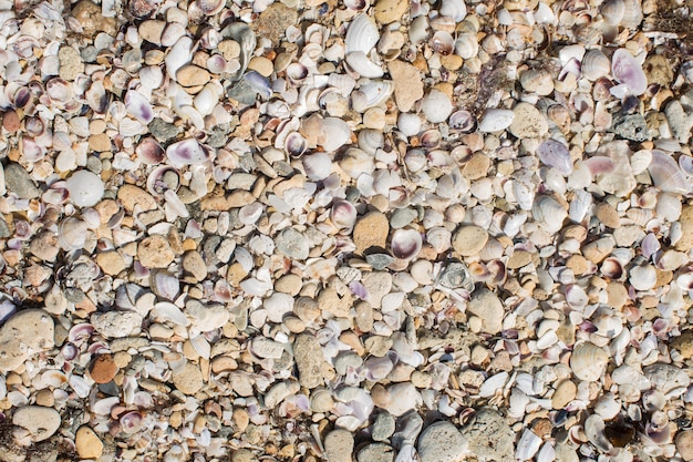 Onda di mare sporca inchiodata a riva vecchie alghe sporche.
