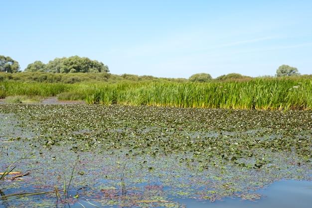 Palude sporca sulla superficie delle erbe