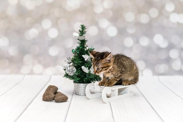 Gattino insoddisfatto